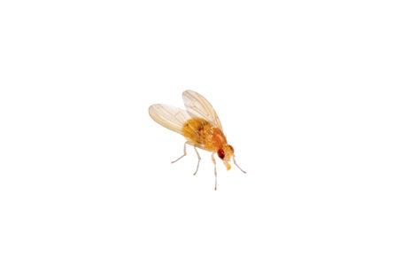 beige fly