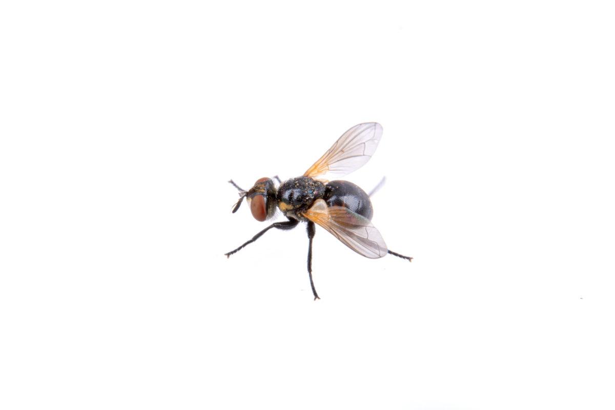 Homemade Fly Killer Spray That is